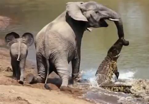 Wenn Tiere Tiere retten - Compilation