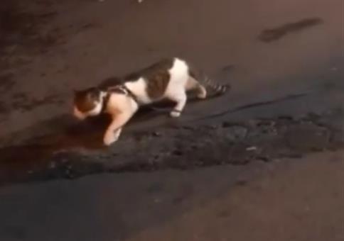 Hund verhindert Cat-Fight