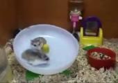 Verrückte Hamster