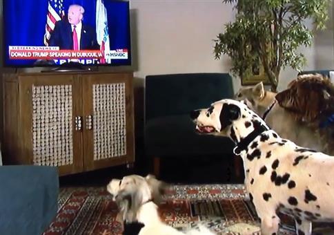 Hunde hören auf Donald Trump