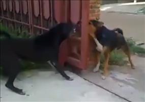 Na zum Glück trennen diese Hunde ein Tor