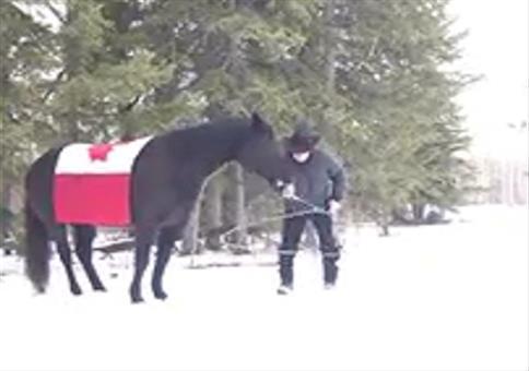 Ein Lasso-schwingendes Pferd