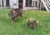 Camouflage Katze
