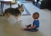 Kleinkind spielt mit Hund