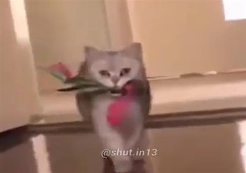 Katze beim Fremdgehen