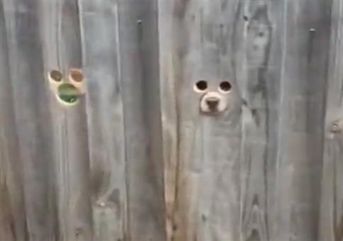 Ein Begrüßungszaun für die Hunde
