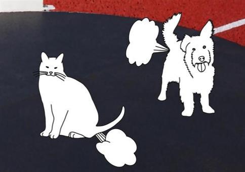 Furzende Katzen gegen furzende Hunde