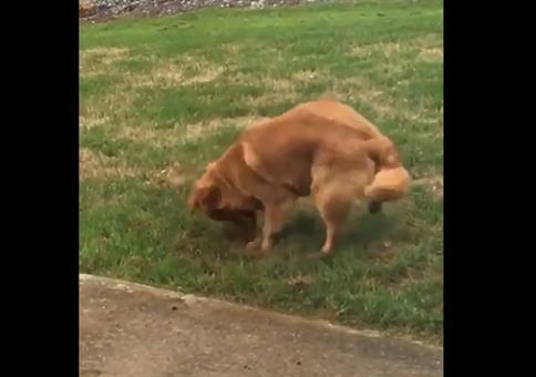 Hund ist nach dem Graben plötzlich unsichtbar