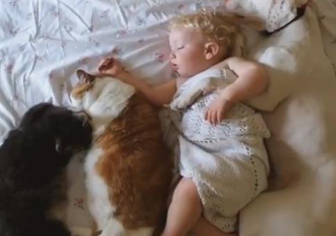 Wenn das Kind und die Haustiere pennen