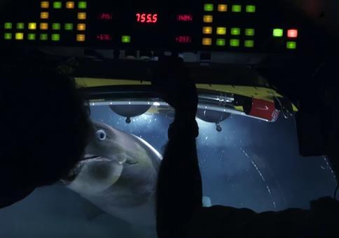 Haie attackieren U-Boot