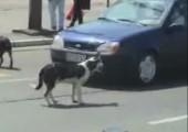 Hund vs. Nummernschild