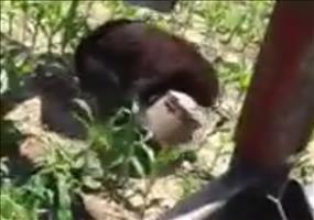 Farmer rettet Bär aus Tonne