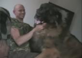 Sehr großer Hund