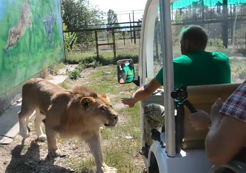 Kuschelkatze im russischen Safaripark