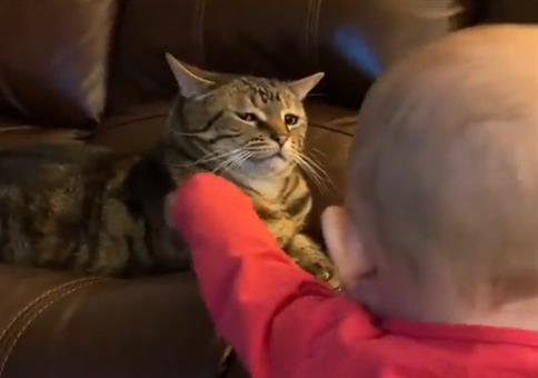 Dieser Katzenblick sagt alles