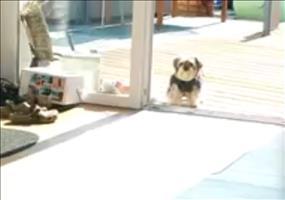 Der Hund und die unsichtbare Tür