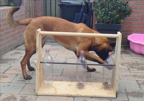 Tolles Beschäftigungsspiel für Hunde