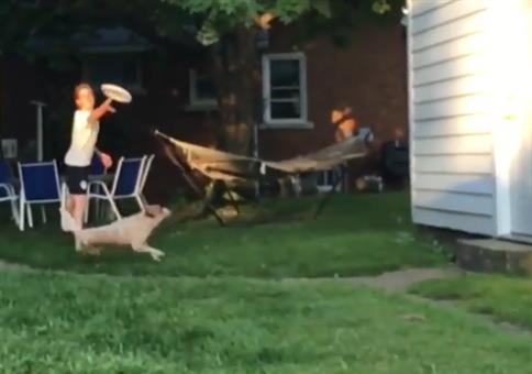 Hund jagt der Frisbeescheibe hinterher