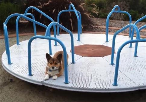 Hund auf nem Karussel auf einem Spielplatz