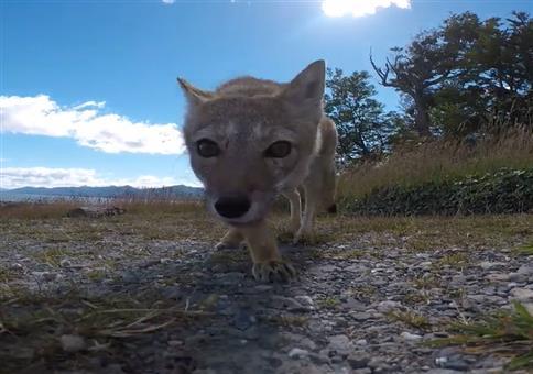 Fuchs du hast die Cam gestohlen