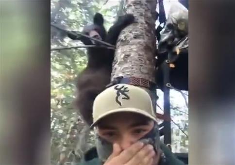 Bärenbesuch auf dem Hochsitz