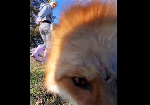 Wenn dir der Fuchs das Smartphone klaut