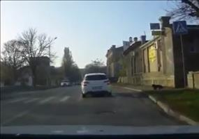 Sicherheitsbewusster Hund im Straßenverkehr