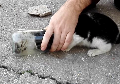 Katze aus Glas retten