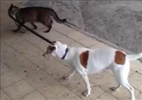 Katze geht mit Hund Gassi