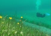 Wiese unter Wasser