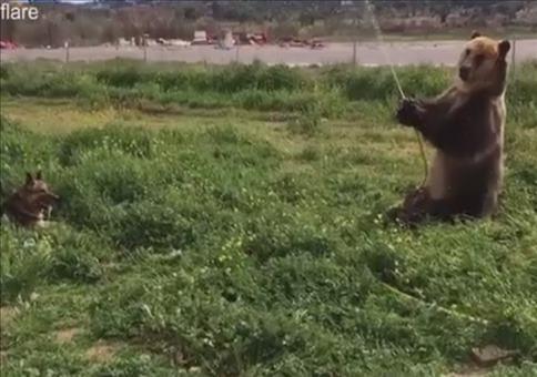Bär ärgert Hund mit Wasserschlauch