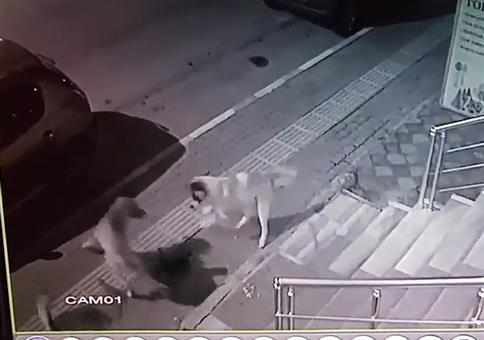 Katze vs Hundegang