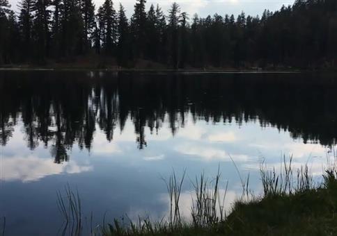 Insekten auf dem See reagieren auf Lärm