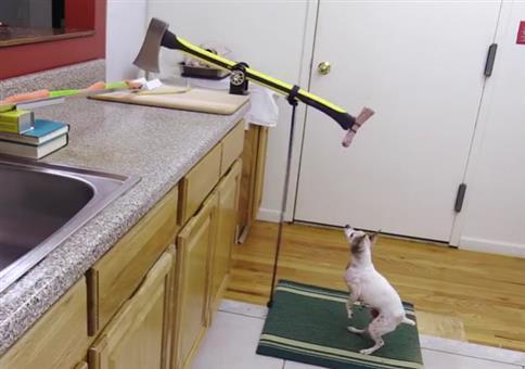 Hund schneidet Gemüse mit Axt