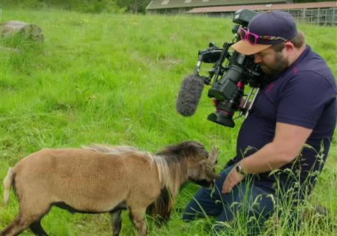 Ein BBC Kameramann braucht Eier aus Stahl