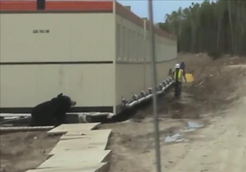 Vorsicht! Bär auf der Baustelle