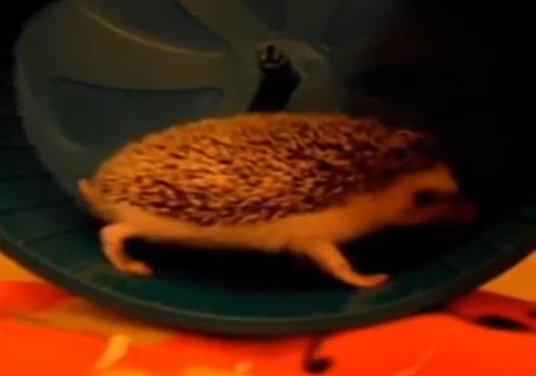 Sonic im beschissenen Laufrad