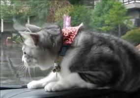 Katze vs. Scheibenwischer