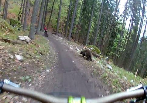 Beim Downhill den Bären grüßen