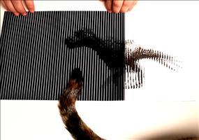 Faszinierende optische Illusionen