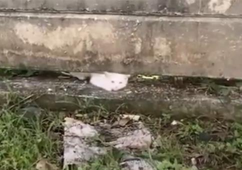 Das war knapp: Wenn die Katze durch die Mauer kommt