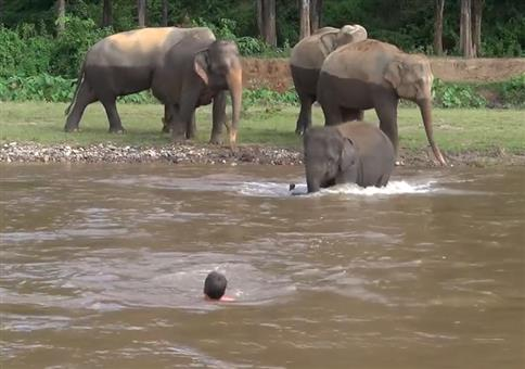 Elefanten Rettungsschwimmer