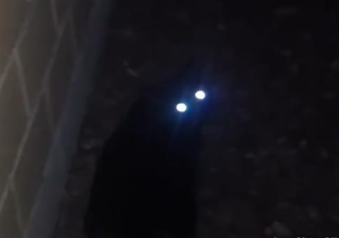 Katzenaugen im Dunkeln