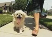 Weltrekord: Längste Hundezunge der Welt