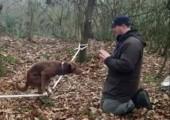 Hund balanciert auf Slackline