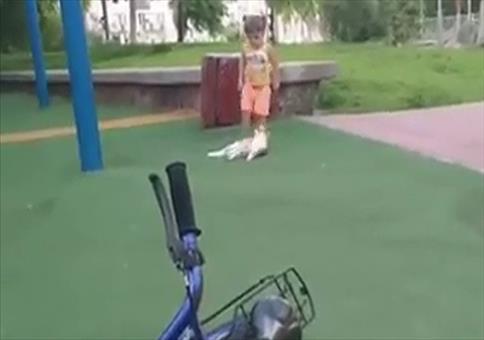 Katze rächt sich für Tritt