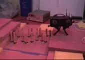 Roboter geht über Hindernisparcour