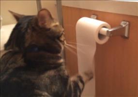 Katze rollt Toilettenpapier ab...