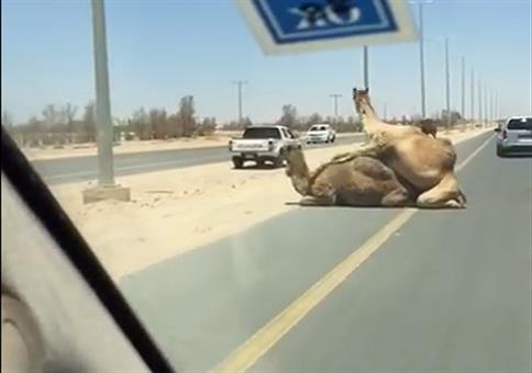 Neulich in Katar