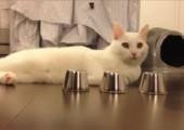 Hütchenspieler-Katze